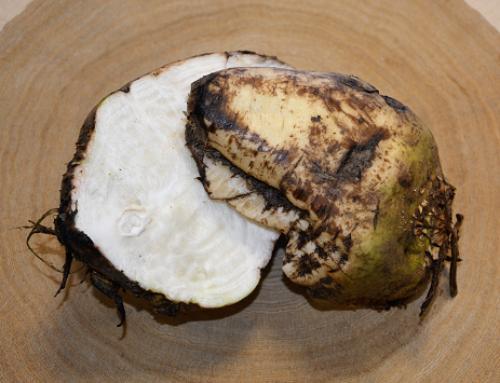 Biomassenpotenzial von Zuckerrüben und -reststoffen untersucht
